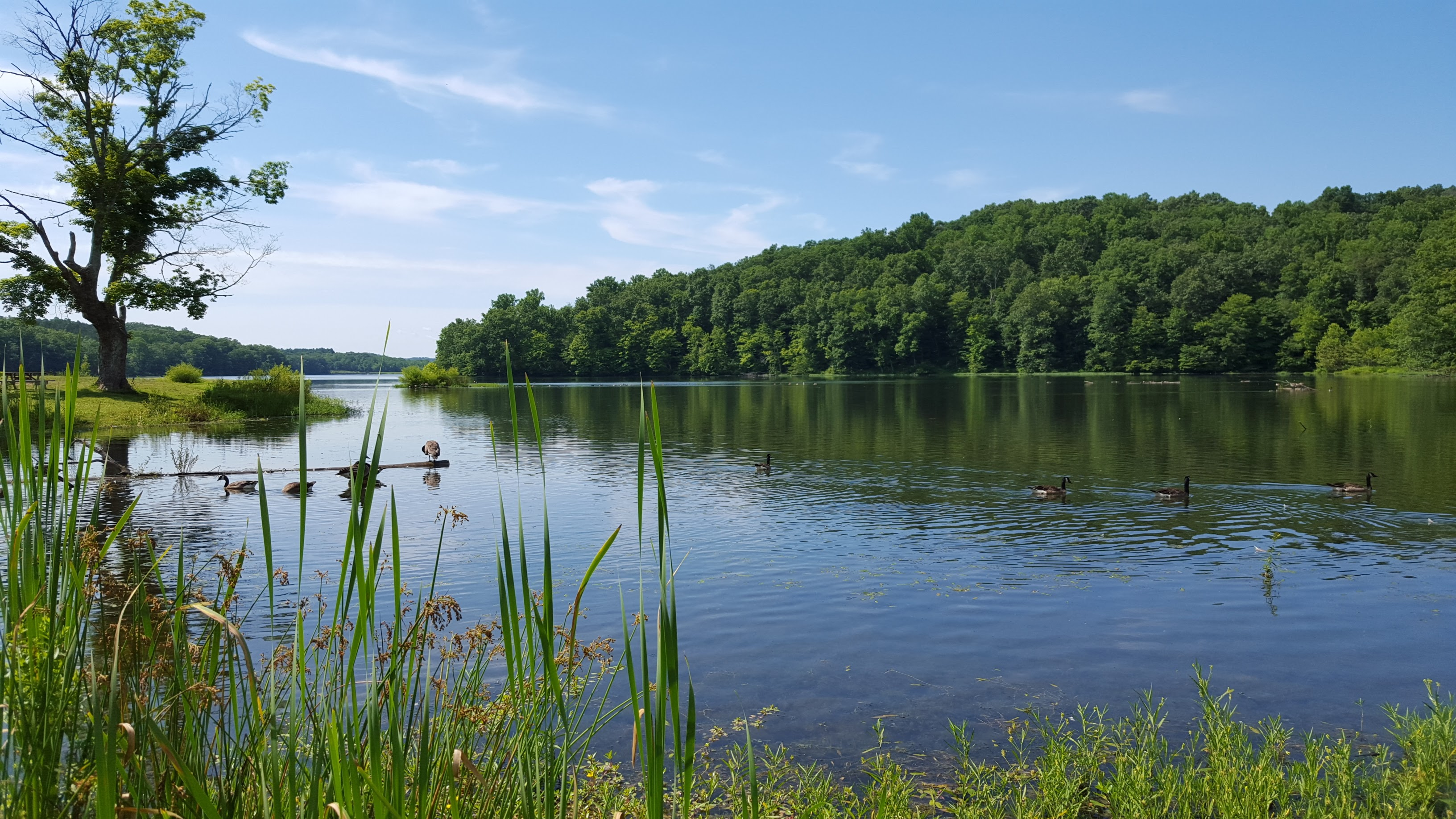 Yellowwood Lake, Yellowwood State Forest, Monroe County, Indiana. June 15, 2016. Photographed by Vanessa M. Snyder.